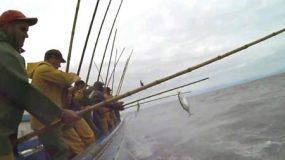 01-Pesca
